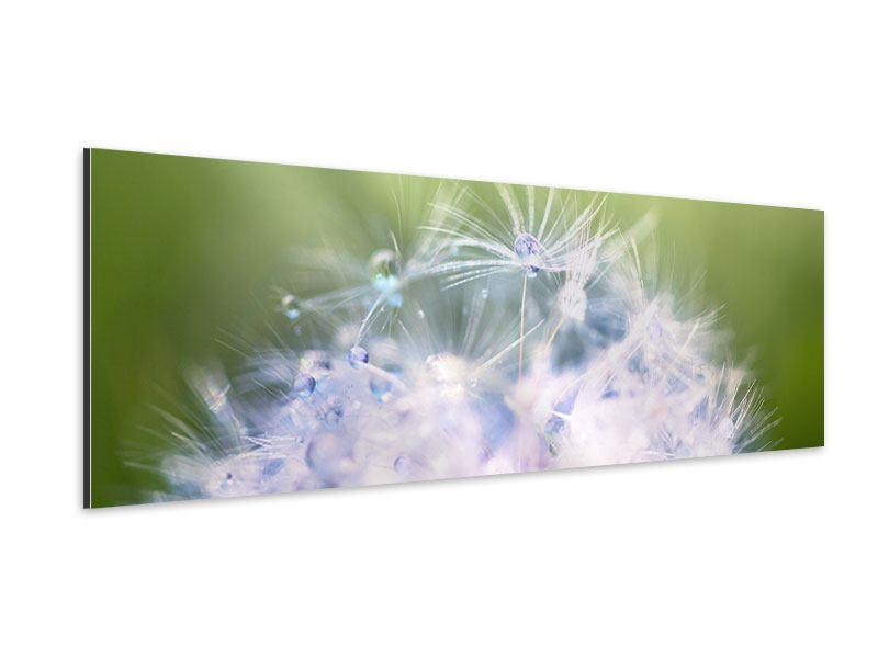 Aluminiumbild Panorama Pusteblume XL im Morgentau