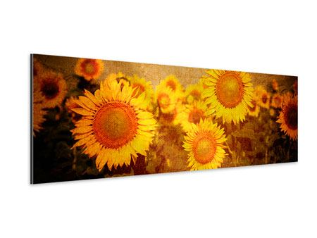 Aluminiumbild Panorama Retro-Sonnenblumen