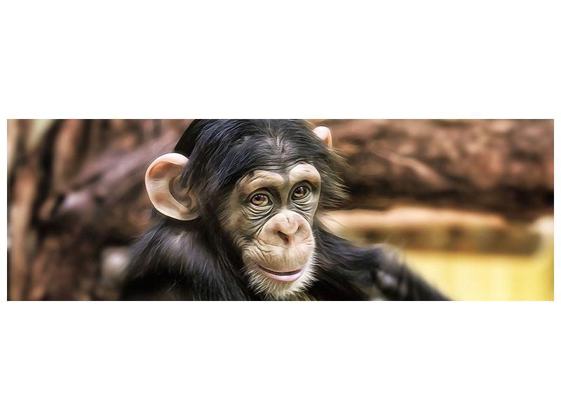 Aluminiumbild Panorama Der Schimpanse