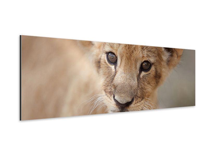 Aluminiumbild Panorama Löwenbaby