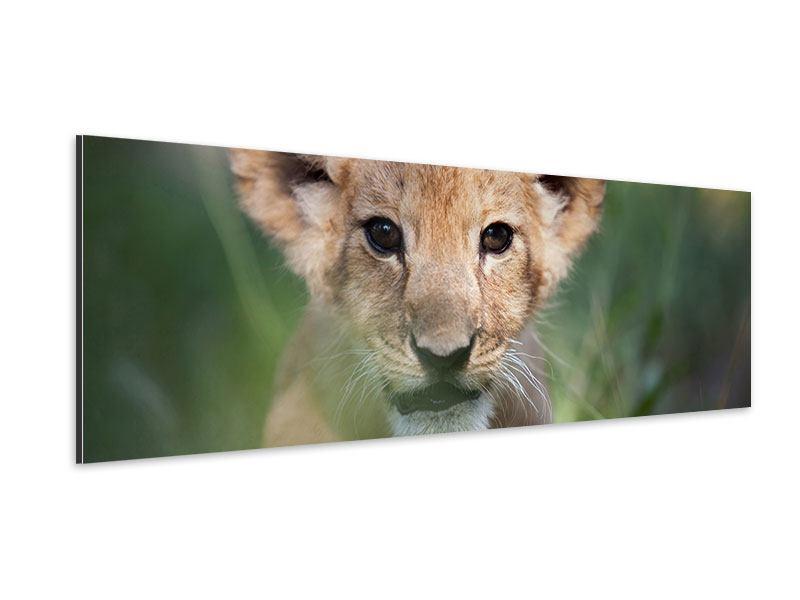 Aluminiumbild Panorama Das Löwenbabay