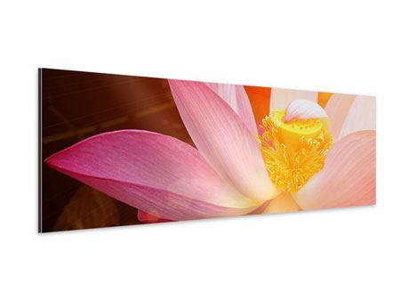 Aluminiumbild Panorama Close Up Lotus