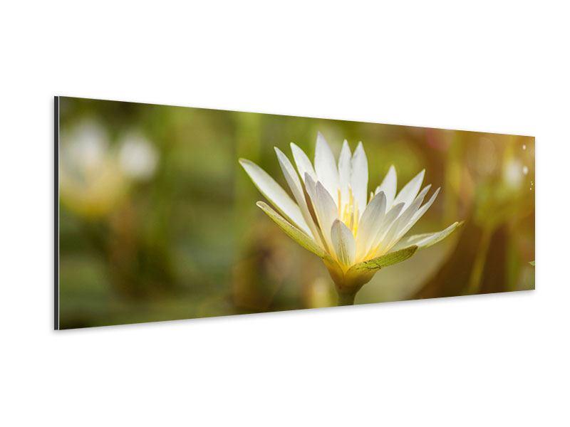 Aluminiumbild Panorama Lilien-Lichtspiel
