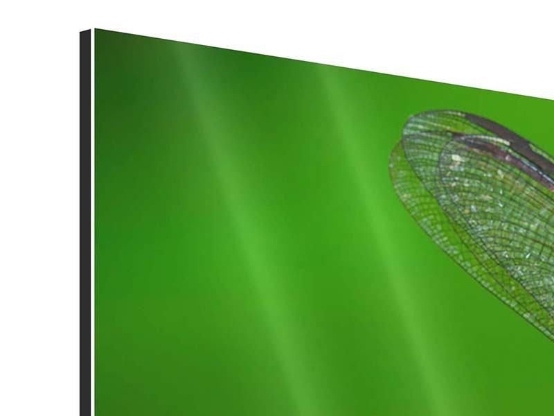Aluminiumbild Panorama Die Libelle