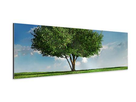 Aluminiumbild Panorama Baum im Grün