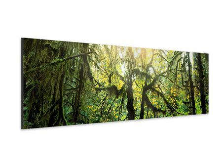 Aluminiumbild Panorama Verträumter Wald