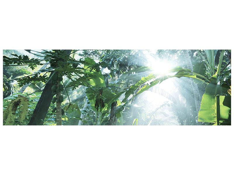 Aluminiumbild Panorama Dschungelstar