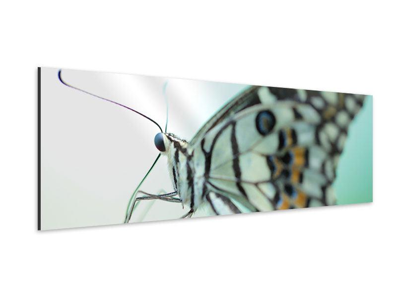 Aluminiumbild Panorama Schmetterling XXL