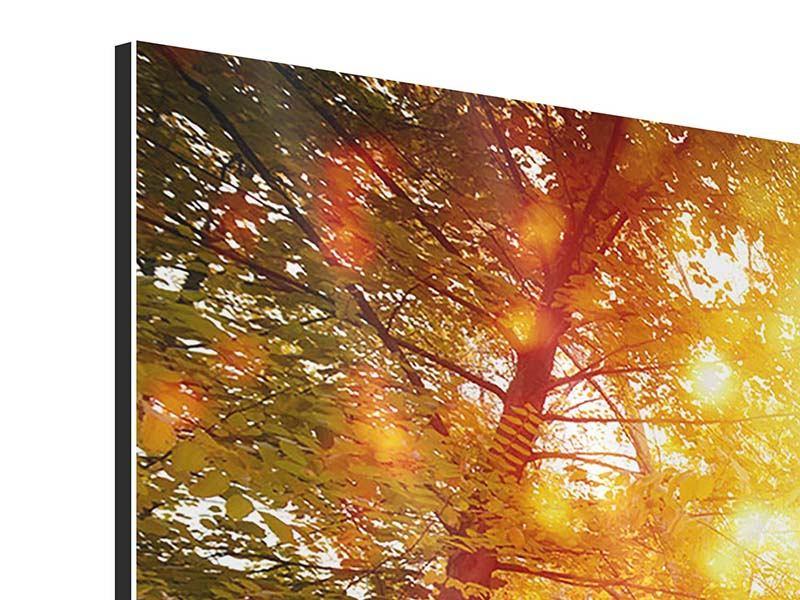 Aluminiumbild Panorama Vollblut im Herbstwald