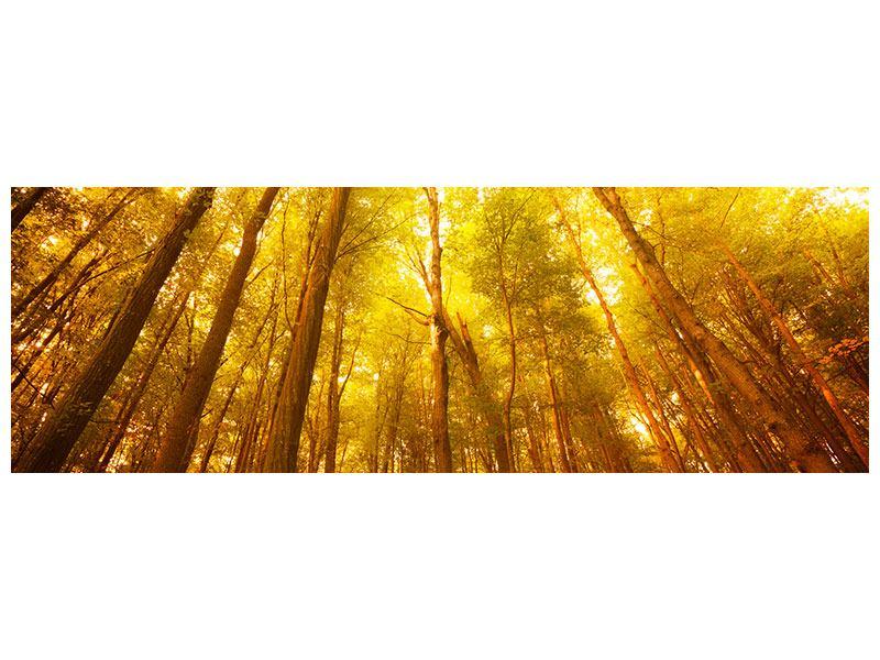 Aluminiumbild Panorama Herbstwald