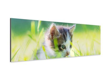 Aluminiumbild Panorama Kitten