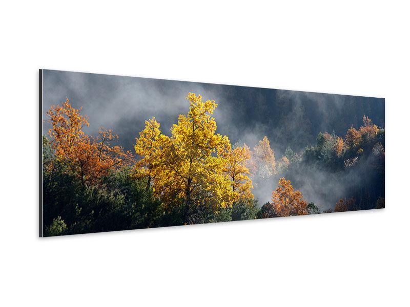 Aluminiumbild Panorama Mondscheinwald