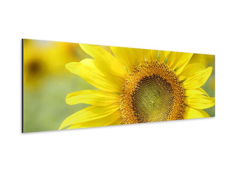 Aluminiumbild Panorama Die Blume der Sonne