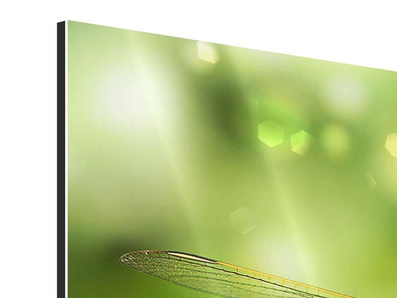 Aluminiumbild Panorama XXL-Libelle