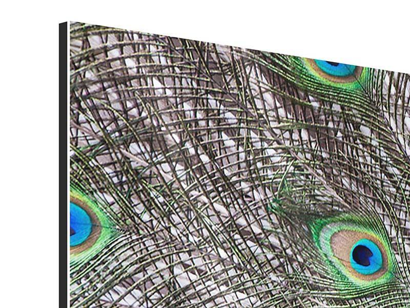 Aluminiumbild Panorama Blauer Pfau