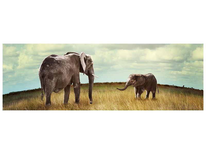 Aluminiumbild Panorama Elefanten und Feng Shui
