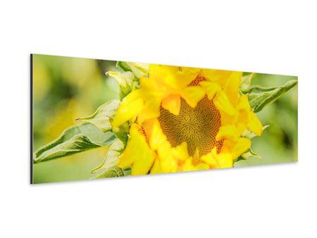 Aluminiumbild Panorama Wilde Sonnenblume