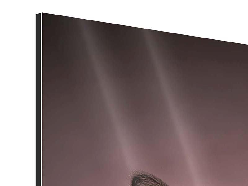 Aluminiumbild Panorama Elegante Samtpfoten