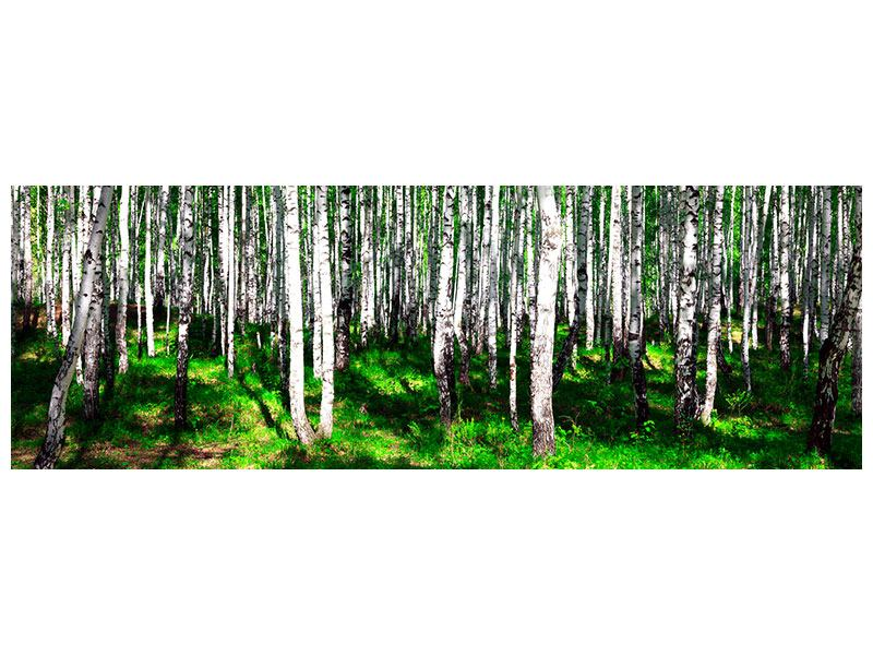 Aluminiumbild Panorama Sommerlicher Birkenwald