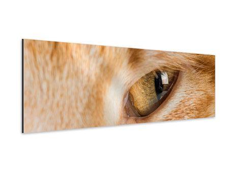 Aluminiumbild Panorama Close Up Katze