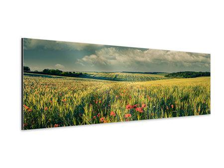 Aluminiumbild Panorama Der Mohn im Weizenfeld