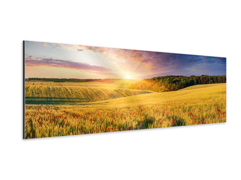 Aluminiumbild Panorama Ein Blumenfeld bei Sonnenaufgang