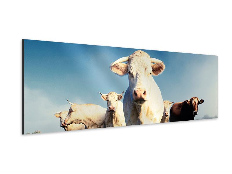 Aluminiumbild Panorama Kühe