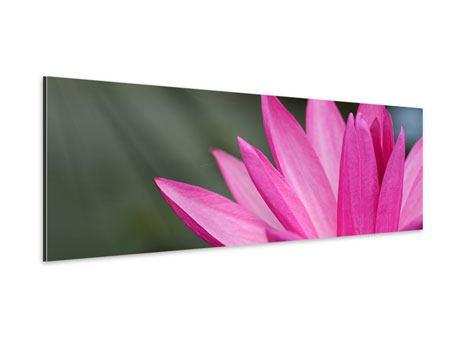 Aluminiumbild Panorama XXL Seerose in Pink