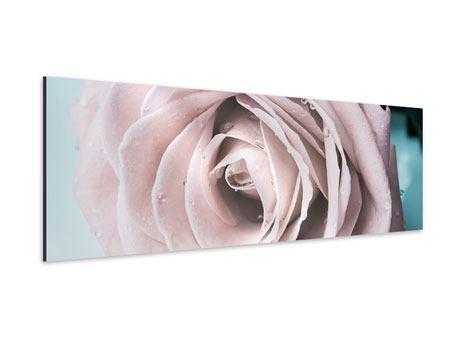 Aluminiumbild Panorama Pastellrose