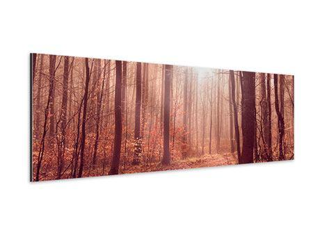 Aluminiumbild Panorama Sonnenuntergang im Herbstwald