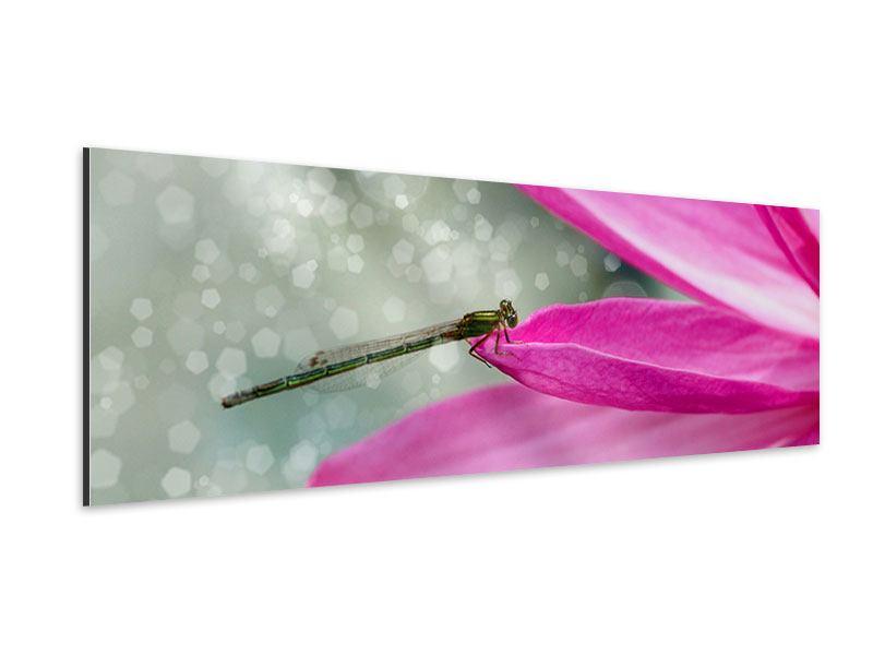 Aluminiumbild Panorama Libelle auf dem Seerosenblatt