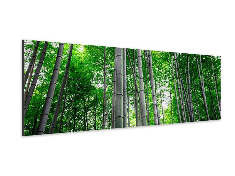 Aluminiumbild Panorama Bambuswald