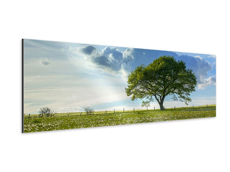 Aluminiumbild Panorama Frühlingsbaum