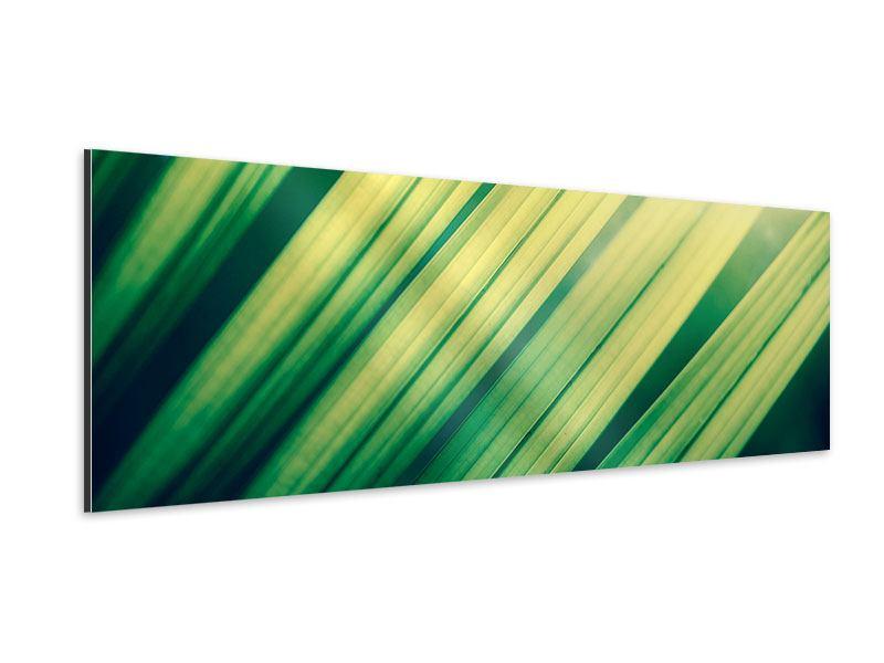 Aluminiumbild Panorama Beleuchtetes Palmblatt