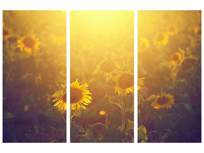 Aluminiumbild 3-teilig Sonnenblumen im goldenen Licht