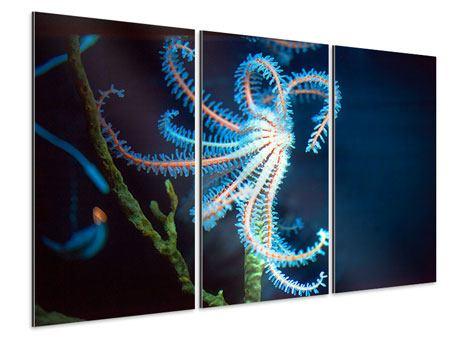 Aluminiumbild 3-teilig Aquarium