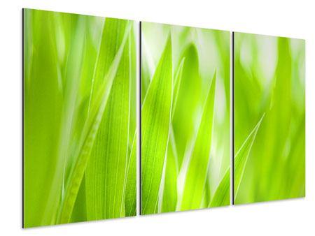 Aluminiumbild 3-teilig Gras XXL
