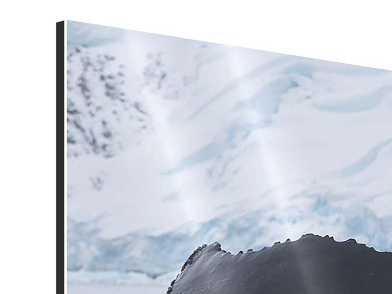 Aluminiumbild 3-teilig Der Buckelwal