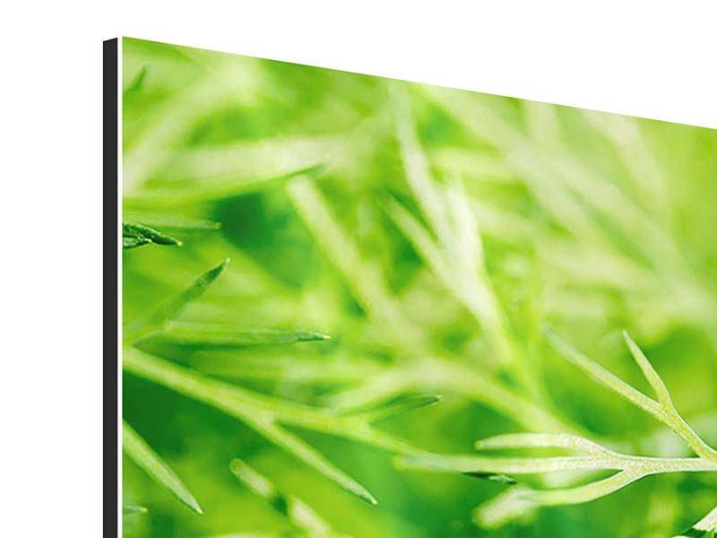 Aluminiumbild 3-teilig XXL Dill