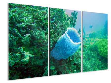 Aluminiumbild 3-teilig Korallen