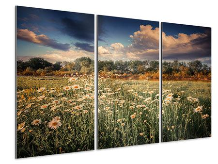 Aluminiumbild 3-teilig Die Wiesenmargerite am Fluss