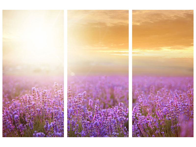 Aluminiumbild 3-teilig Sonnenuntergang beim Lavendelfeld