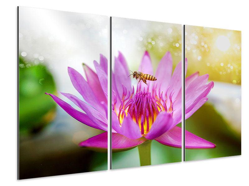 Aluminiumbild 3-teilig Die Lotus mit Biene