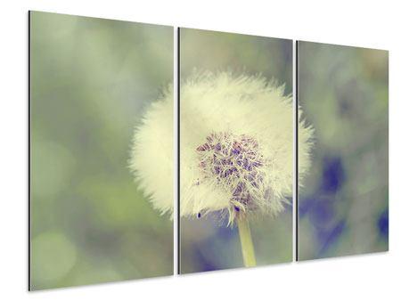 Aluminiumbild 3-teilig Die Pusteblume
