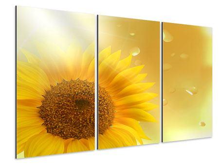 Aluminiumbild 3-teilig Sonnenblume im Morgentau