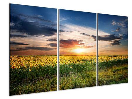 Aluminiumbild 3-teilig Ein Feld von Sonnenblumen