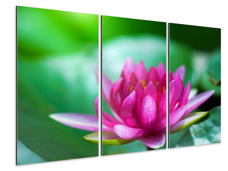 Aluminiumbild 3-teilig Lotus in Pink