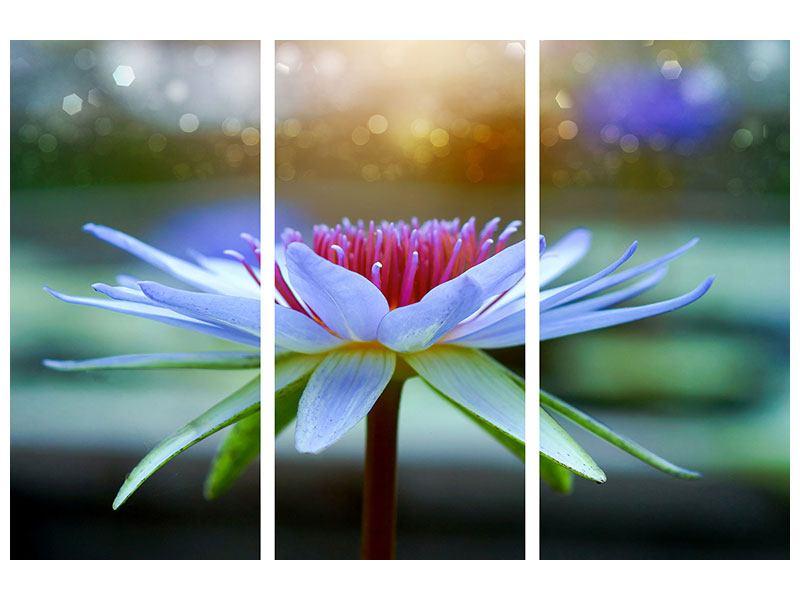 Aluminiumbild 3-teilig Pretty Lotus