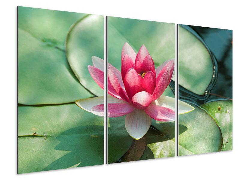 Aluminiumbild 3-teilig Der Frosch und das Lotusblatt