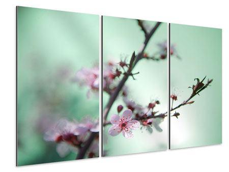 Aluminiumbild 3-teilig Die japanische Kirschblüte